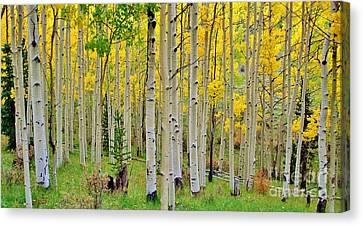 Aspen Slope Canvas Print