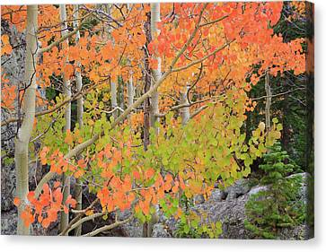 Canvas Print featuring the photograph Aspen Stoplight by David Chandler
