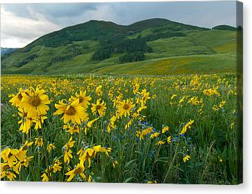 Aspen Sunflower And Mountain Landscape Canvas Print
