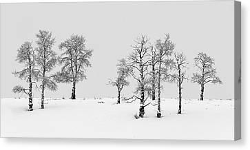 Aspen Tree Line-up Canvas Print