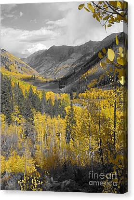 Aspen Valley In Fall Canvas Print by Jeff White