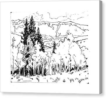 Aspens Against The Evergreens Canvas Print