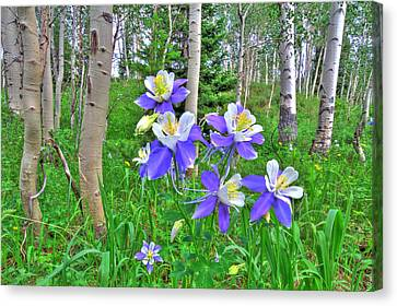 Aspens And Columbines Canvas Print by Scott Mahon