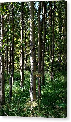 Canvas Print featuring the photograph Aspens And Shadows by Marilynne Bull