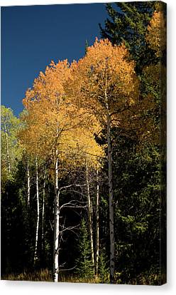Canvas Print featuring the photograph Aspens And Sky by Steve Stuller