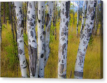 Canvas Print featuring the photograph Aspens by Gary Lengyel