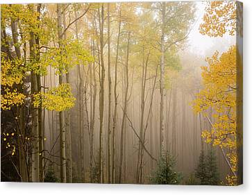 Aspens In Autumn 10 - Santa Fe National Forest New Mexico Canvas Print