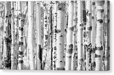 Canvas Print featuring the photograph Aspens In Black And White  by Saija Lehtonen