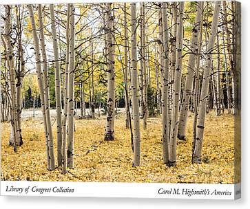 Canvas Print featuring the photograph Aspens In Conejos County In Colorado, Near The New Mexico Border by Carol M Highsmith