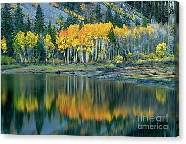 Aspens In Fall Color Along Lundy Lake Eastern Sierras California Canvas Print by Dave Welling