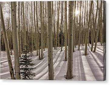 Aspens In Winter 2 - Santa Fe National Forest New Mexico Canvas Print