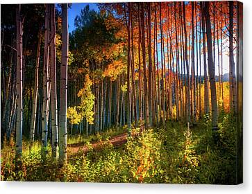 Canvas Print featuring the photograph Aspens Of The West Elk Mountains by John De Bord