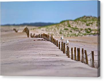 Assateague Island Canvas Print by Rick Berk