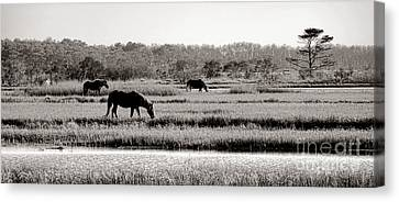 Assateague Canvas Print by Olivier Le Queinec