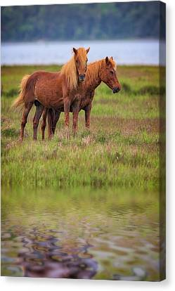 Assateague Ponies In The Marsh Canvas Print by Rick Berk