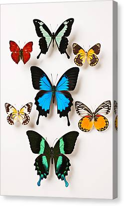 Assorted Butterflies Canvas Print by Garry Gay