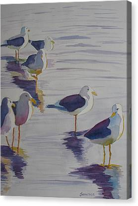 Assorted Gulls Canvas Print by Jenny Armitage
