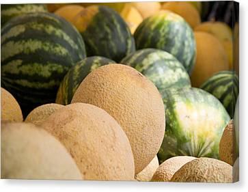 Assortment Of Melons Canvas Print by Dina Calvarese