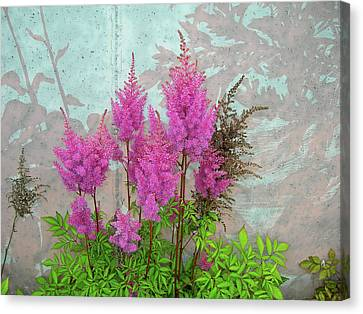 Astilbe And Shadows Canvas Print by Randy Rosenberger