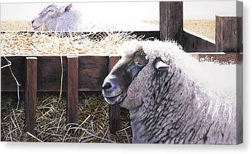 At Rest Canvas Print by Denny Bond