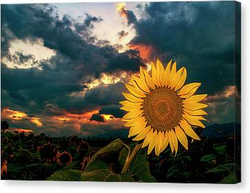 At Sunset Canvas Print