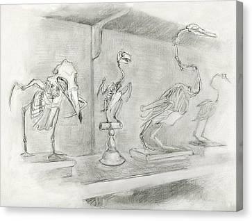 Bird Skeletons Canvas Print