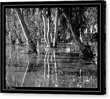 Canvas Print featuring the photograph At The Swamp 2 by Arik Baltinester