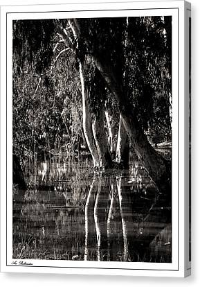 Canvas Print featuring the photograph At The Swamp by Arik Baltinester