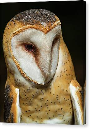 Canvas Print featuring the photograph Athena The Barn Owl by Arthur Dodd