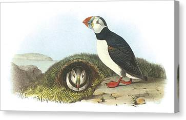Atlantic Puffin Canvas Print by John James Audubon