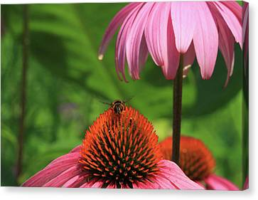 Atop A Cone Canvas Print by Karol Livote