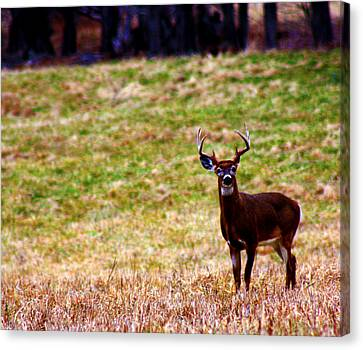 Attentive Buck Canvas Print