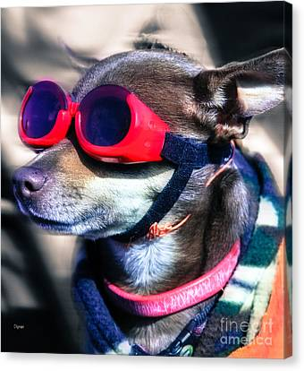 Attitude  Canvas Print by Steven Digman