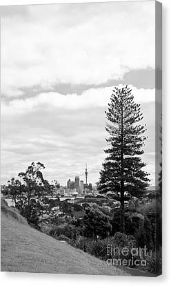 Auckland City New Zealand Canvas Print