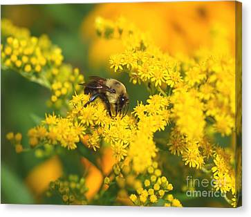 Canvas Print featuring the photograph August Bee by Susan  Dimitrakopoulos
