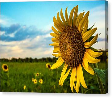 August Icon  Canvas Print