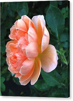 Canvas Print featuring the photograph August Rose 09 by Joyce Dickens