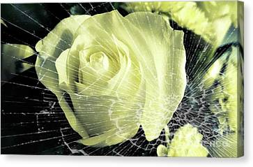 Aunt Edna's Rose Canvas Print by Rachel Hannah