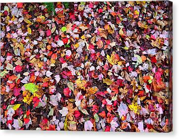 Canvas Print - Auntumn Petals  by Catherine Reusch Daley