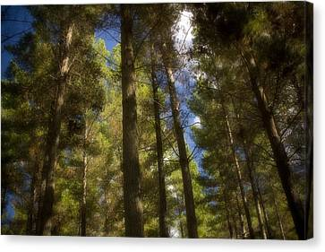 Aupouri Forest Canvas Print by Graham Hughes
