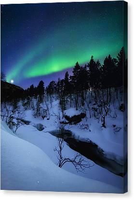 Aurora And A Full Moon Over Tennevik Canvas Print by Arild Heitmann