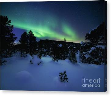 Aurora Borealis Over Forramarka Woods Canvas Print by Arild Heitmann
