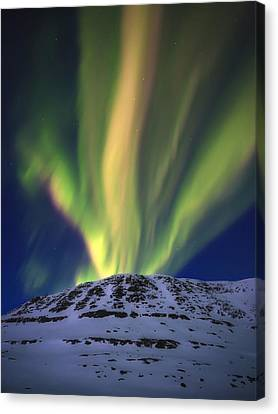 Aurora Borealis Over Toviktinden Canvas Print by Arild Heitmann