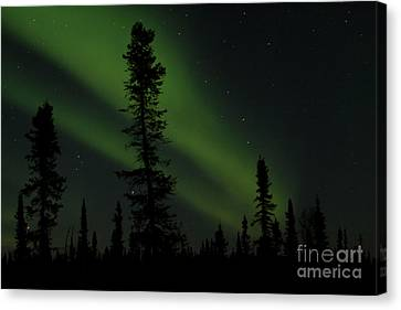 Aurora Borealis The Northern Lights Interior Alaska Canvas Print by Sharon Mau