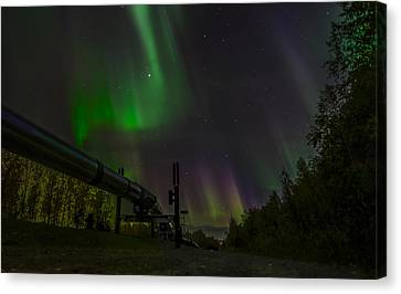 Aurora Over  Trans-alaska Pipeline Canvas Print by Robin Williams