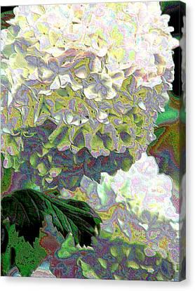 Aurora Two Canvas Print