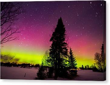 Aurora With Spruce Tree Canvas Print