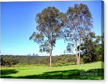 Canvas Print featuring the photograph Aussie Gum Tree Landscape By Kaye Menner by Kaye Menner