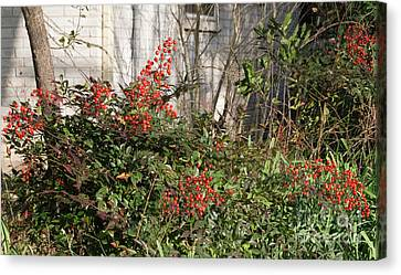 Canvas Print featuring the photograph Austin Winter Berries by Linda Phelps