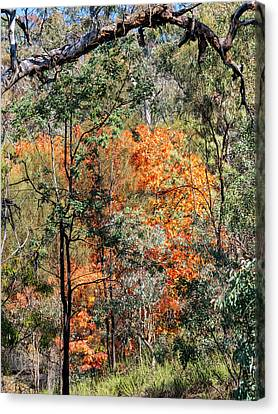 Australian Bush Autumn 2 Canvas Print